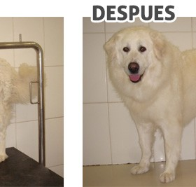 antes-despues_1