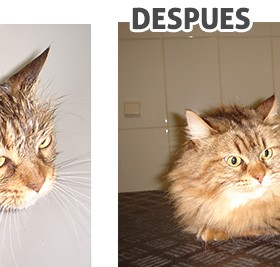 antes-despues_2