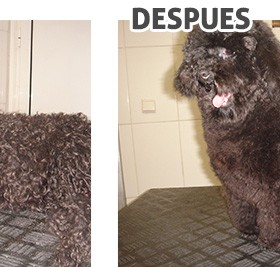 antes-despues_4