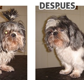 antes-despues_6
